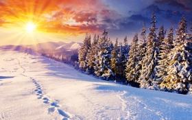 Обои зима, солнце, снег, деревья, следы, природа, дерево