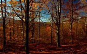 Картинка осень, небо, листья, деревья, горы
