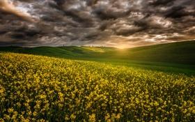 Картинка поле, лето, небо, лучи, тучи, природа, рапс