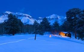Картинка деревья, ночь, огни, праздник, рождество, Колорадо, США