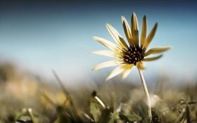 Обои цветок, лето, трава, лепестки