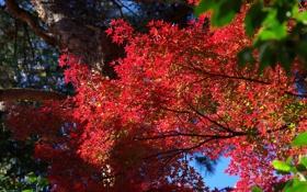 Картинка листья, деревья, ветки, природа
