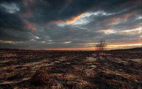 Картинка поле, небо, пейзаж, пожар, дерево