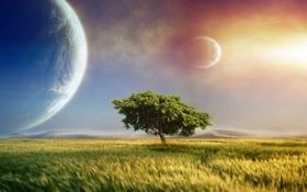 Картинка небо, трава, облака, пейзаж, закат, фантазия, дерево