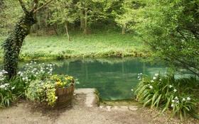 Картинка green, river, trees, flowers, plants