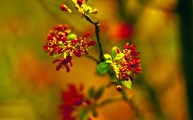 Картинка весна, цветение, сад, для Литы, crabapple, ветка, боке