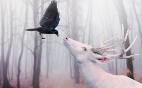 Картинка лес, деревья, птица, олень, ворон