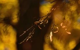 Обои природа, листья, осень, макро
