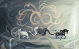 Обои конь, Infinity, бык