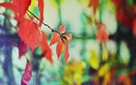 Обои цвета, дерево, забор, настроение осень