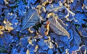 Обои листья, мороз, иней, природа, свет, кристаллы