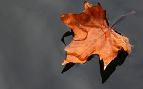 Картинка вода, макро, лист, сухой