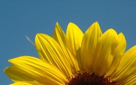 Обои поле, макро, подсолнухи, цветы, природа, растения, лепестки