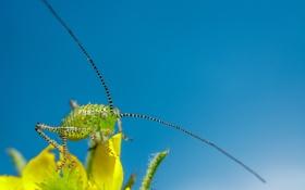 Картинка насекомое, лепестки, небо, цветок, боке