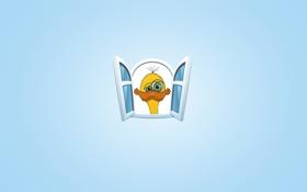 Обои морда, желтый, птица, окно, страус, птенец, синий фон