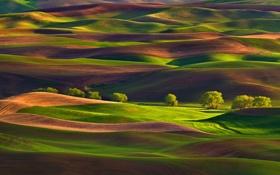 Картинка поле, деревья, холмы