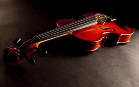 Картинка red, wood, violin, stringed instrument