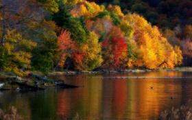 Обои осень, деревья, пейзаж, природа, утки, время года