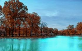 Обои деревья, осень, небо, парк, вода