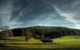 Картинка деревья, пейзаж, обои, красота, grass, forest, trees