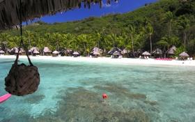 Картинка пляж, вода, пальмы, бора-бора