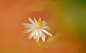Картинка цветок, природа, фон, краски, лепестки