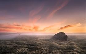 Обои иней, трава, туман, рассвет, камень, утро