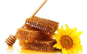Обои цветок, соты, мед, ложка, белый фон, деревянная