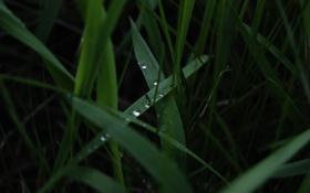 Картинка трава, зеленый, вечер