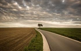 Обои road, sky, tree, color, route, ciel, arbre