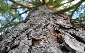 Картинка макро, ветки, дерево, ствол, кора
