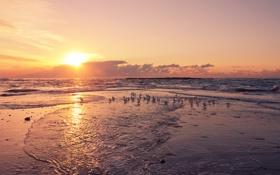 Картинка море, солнце, закат, чайки, прибой