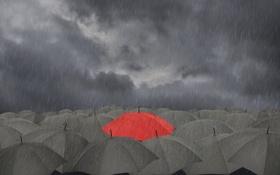 Обои дождь, зонтики, тучи, красный