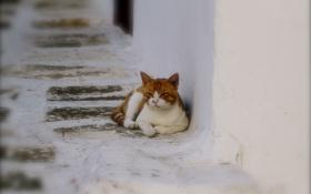 Картинка кошка, улица, лежит, белая, рыжая, в полоску