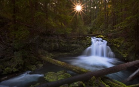 Картинка лес, солнце, свет, деревья, река, поток, утро