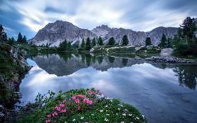 Картинка цветы, горы, озеро