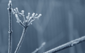 Картинка холод, иней, трава, ветки, стебли, кристаллы, сухая
