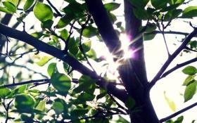 Обои зелень, лето, свет, ветки, дерево