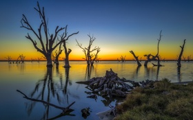 Картинка trees, Australia, Lake Bonney