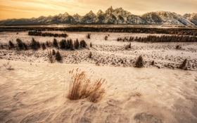 Обои зима, снег, горы, США, горный хребет, панорамма