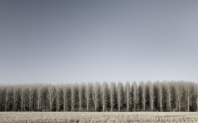 Картинка поле, деревья, фото, дерево, пейзажи, поля, леса