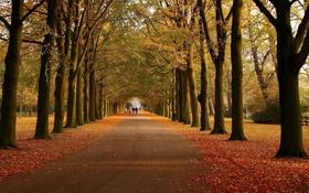 Обои дорога, осень, листья, деревья, прохожие