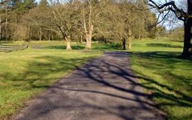 Картинка дорога, пейзаж, парк
