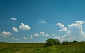 Обои поле, облака, Небо, весна