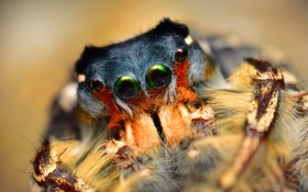 Картинка насекомое, боке, паучок