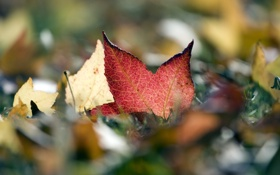 Обои осень, листва, шуршит, automne