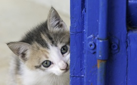 Обои глаза, взгляд, котенок, мордочка