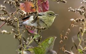 Обои листья, птица, ветка, перья, клюв