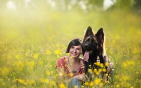 Картинка лето, девушка, собака