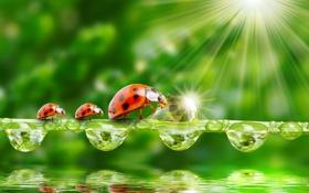 Обои зелень, вода, капли, природа, лучи солнца, nature, water